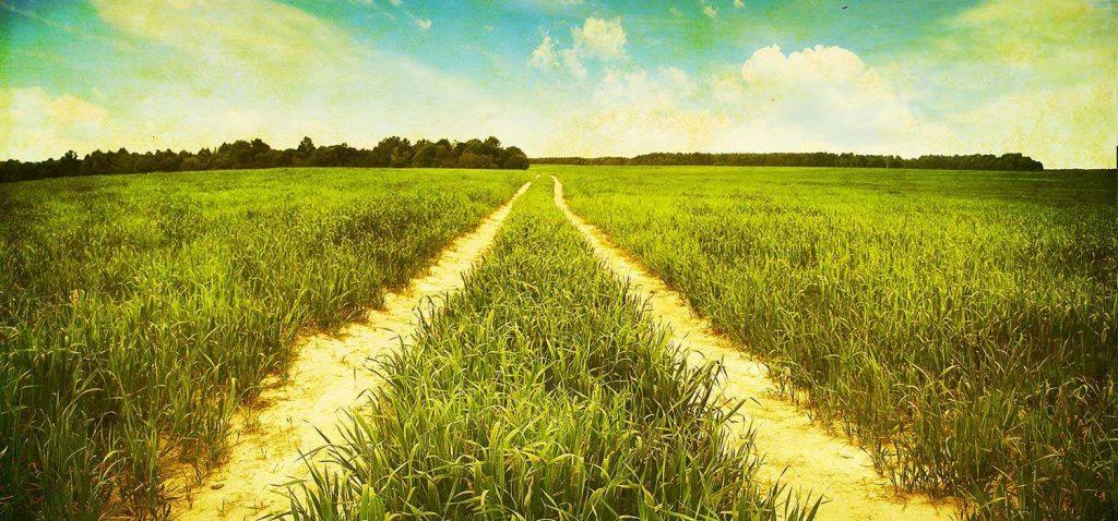 Field in Boone County Nebraska